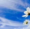自然の力はすべての人類で最も好条件を備える乳がんのAさんを救ってください
