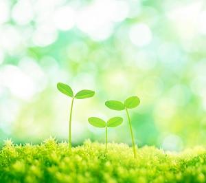 すべての生命は自分を中心に、自分のやり方で成長し愛を表現しはじめます