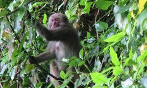 西大分駅から高崎山に登る(徒歩で野生の猿を見る方法)