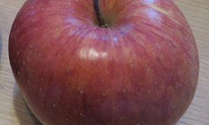「奇跡のりんご」の木村秋則さん指導の福島の田んぼの米からは1ベクレルも検出されない