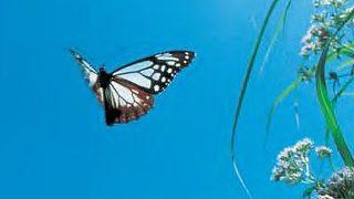 自分が一番心地よい状態を優先して【軽やかに】流れていけば、人生はうまくいくようになっている