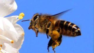 日本ミツバチの養蜂はじめました!(アナスタシアの蜂のアドバイス)